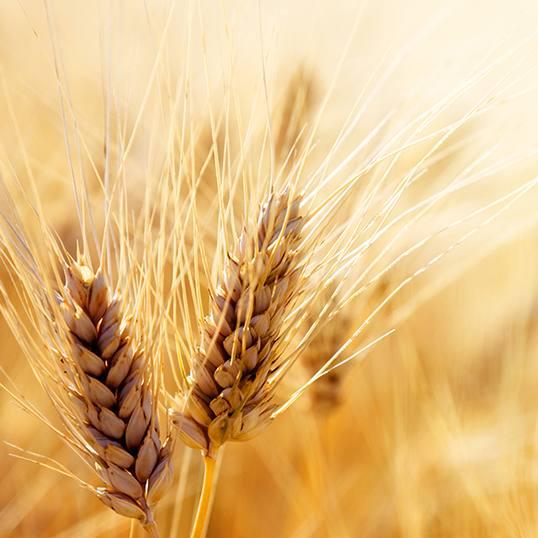 Agricosmesi